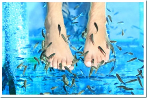 fish-pedicure-1